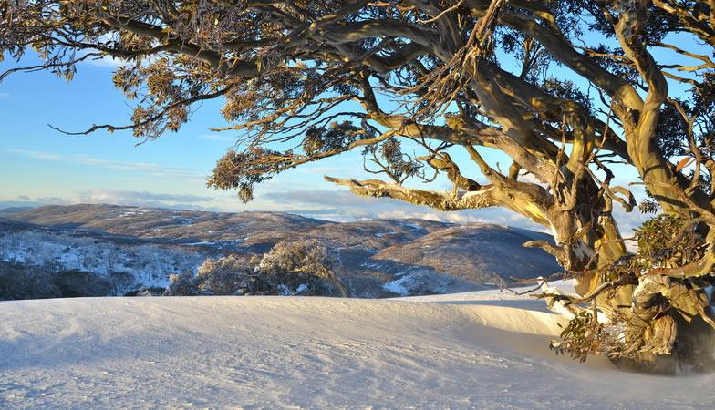 COVID-19 Snow Update